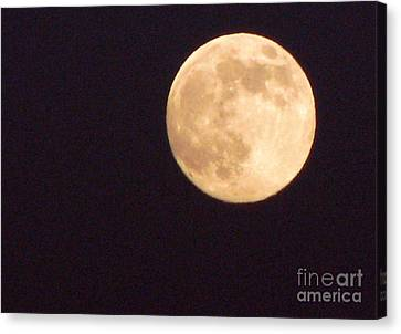Canvas Print featuring the photograph Rabbit In The Moon by Phyllis Kaltenbach