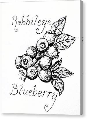 Rabbiteye Blueberry Canvas Print