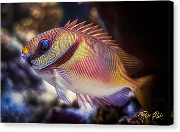 Rabbitfish Canvas Print