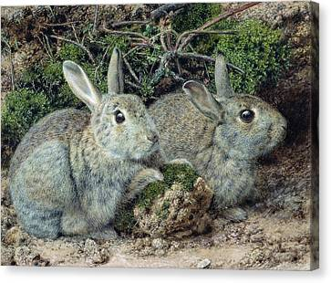Rabbits Canvas Print by John Sherrin