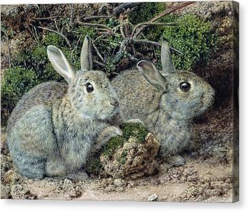 Rabbits Canvas Print
