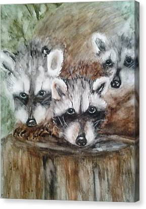 Raccoon Babies By Christine Lites Canvas Print by Allen Sheffield