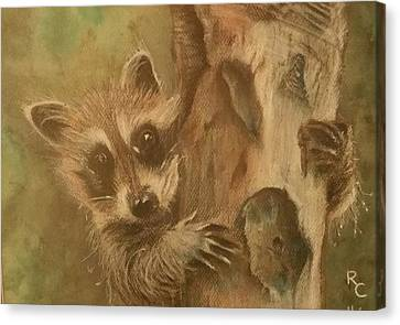 Raccoon Chillin' Canvas Print
