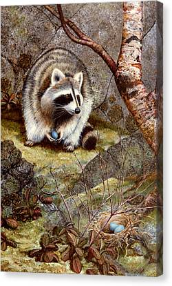 Raccoon Found Treasure  Canvas Print by Frank Wilson