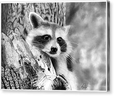Racoon In Tree Drawing Canvas Print