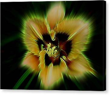Radiant Daylily Canvas Print by Shirley Sirois