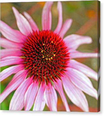 Radiant Pink Canvas Print