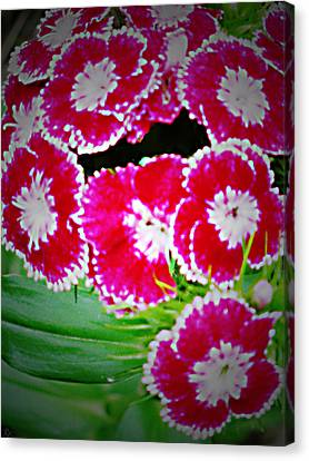 Canvas Print featuring the photograph Radiant Red  by Debra     Vatalaro