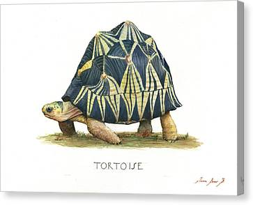 Radiated Tortoise  Canvas Print by Juan Bosco