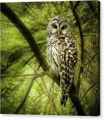 Radiating Barred Owl Canvas Print by Jean Noren