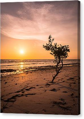 Radiating Canvas Print by Clay Townsend