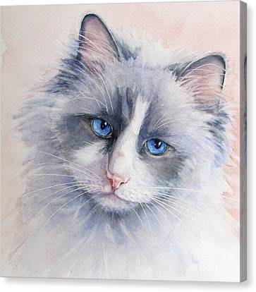 Ragdoll Cat Canvas Print