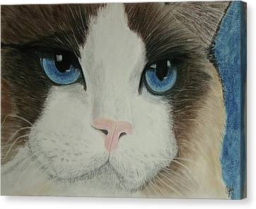 Ragdoll Cat Canvas Print by Cybele Chaves