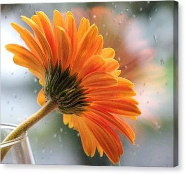 Rain Drops At My Window Canvas Print by Angela Davies
