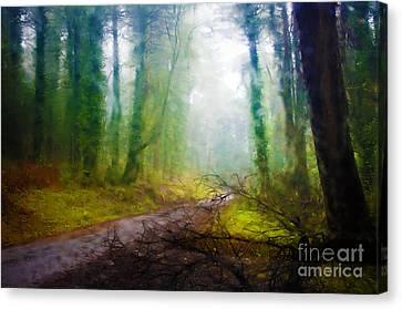 Rain Forest Canvas Print by Carlos Caetano