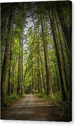 Rain Forest Dirt Road Canvas Print by Randall Nyhof