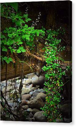 Rain Forest Walk Canvas Print