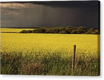 Rain Front Approaching Saskatchewan Canola Crop Canvas Print by Mark Duffy
