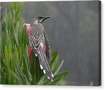 Rainbird Canvas Print