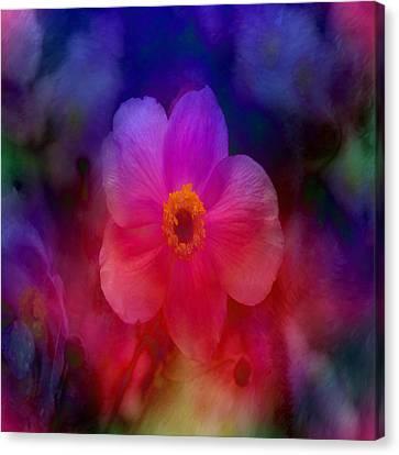 Rainbow Anemone Canvas Print by Lena Photo Art