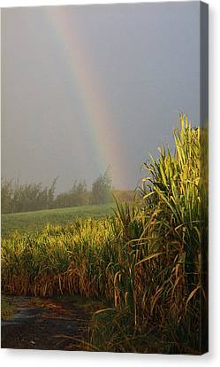 Rainbow Arching Into Field Behind Stream Canvas Print by Stockbyte