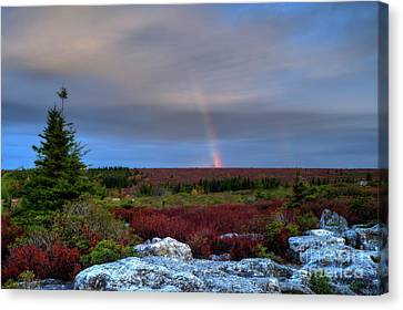 Rainbow At Dolly Sods In Morning Canvas Print by Dan Friend