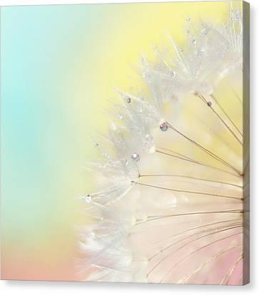 Rainbow Connection II Canvas Print
