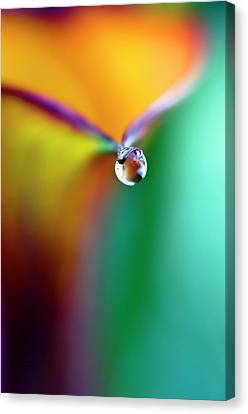Rainbow Drop Canvas Print by Crystal Wightman