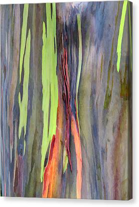 Rainbow Eucalyptus 13 Canvas Print by Dawn Eshelman