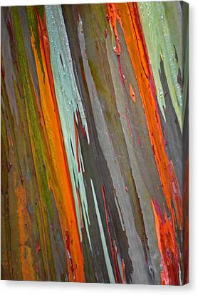 Rainbow Eucalyptus Tree Canvas Print