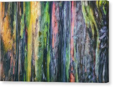 Rainbow Forest Canvas Print by Ryan Manuel