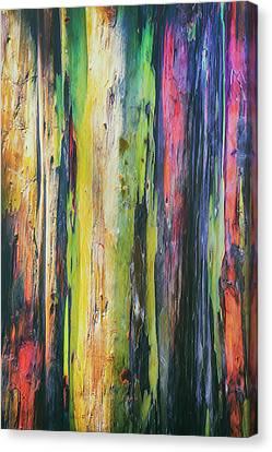 Rainbow Grove Canvas Print by Ryan Manuel
