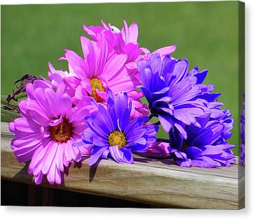 Rainbow Mums 2 Of 5 Canvas Print by Tina M Wenger