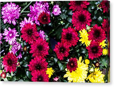 Rainbow Of Color Flowers Canvas Print