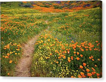 Canvas Print featuring the photograph Rainbow Of Wildflowers Bloom Near Diamond Lake In California by Jetson Nguyen