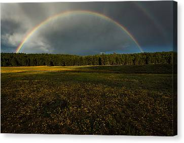 Rainbow Over The Forest Canvas Print