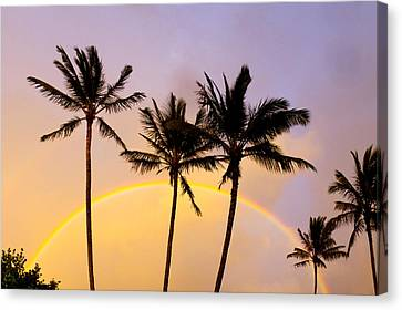 Rainbow Palms Canvas Print by Sean Davey