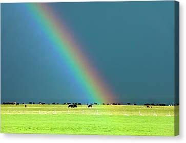 Rainbow Pasture Canvas Print by Todd Klassy
