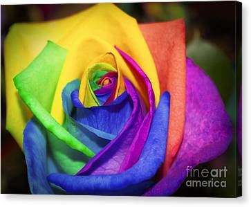 Rainbow Rose In Paint Canvas Print by Janice Rae Pariza