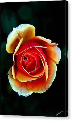Canvas Print featuring the photograph Rainbow Rose by John Haldane