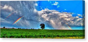 Fort Collins Canvas Print - Rainbow Tree by Scott Mahon