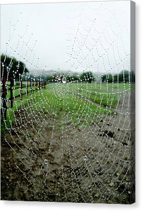 Raincatcher Web Canvas Print