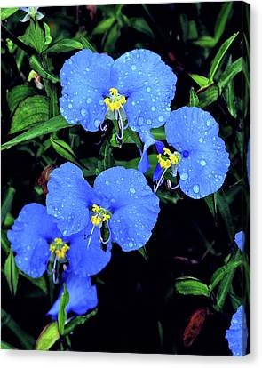 Raindrops In Blue Canvas Print
