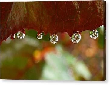 Raindrops On A Red Leaf Canvas Print by Patricia Strand
