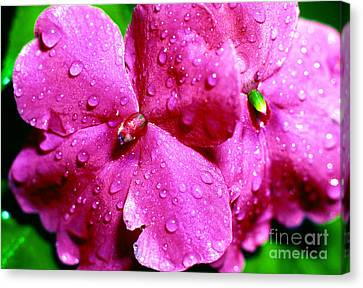 El Yunque Canvas Print - Raindrops On Impatiens by Thomas R Fletcher