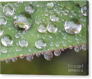 Raindrops On Leaf. Canvas Print by Kim Tran