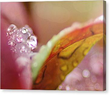 Raindrops On Nandina Canvas Print by Bellesouth Studio