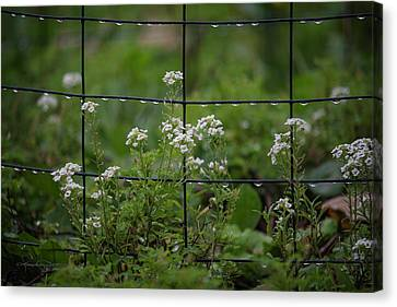 Raindrops On The Garden Fence Canvas Print by Karen Casey-Smith