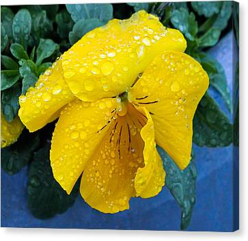 Canvas Print featuring the photograph Raindrops On Yellow Pansy by E Faithe Lester