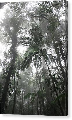 Canvas Print - Rainforest by AR Annahita